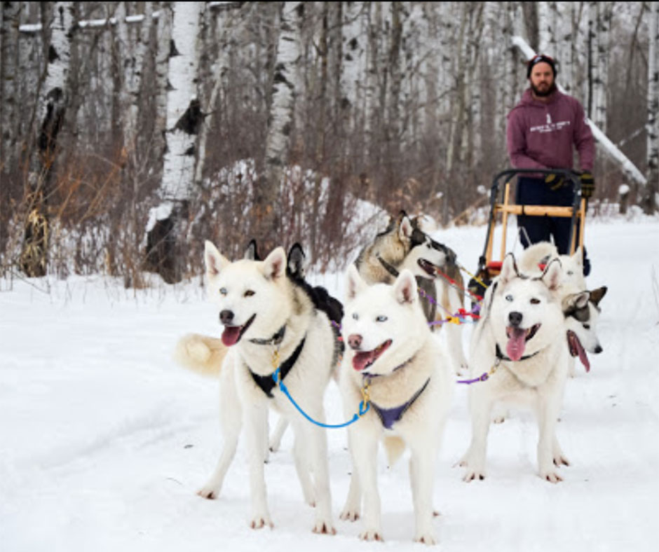 Dog Sledding and Winter Glamping at Harness the Adventure